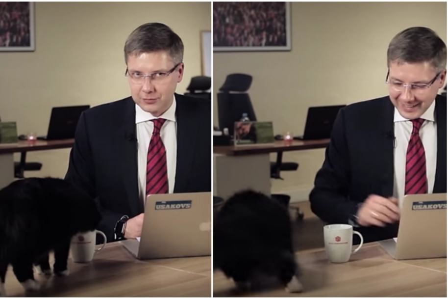 Alcalde en Letonia es interrumpido por gato.