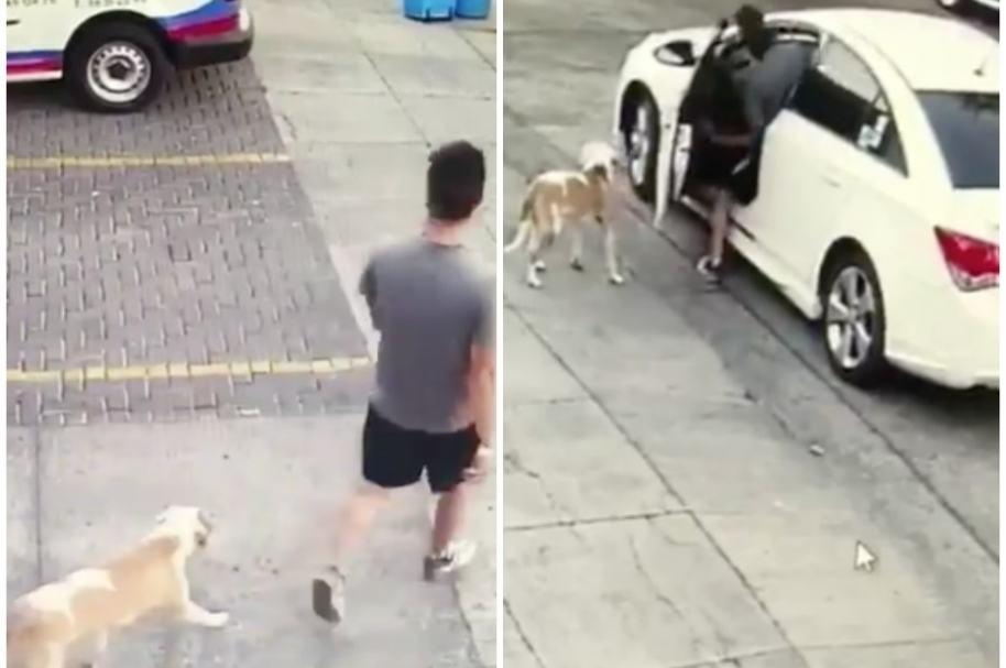 Mexicano abandona perrito.