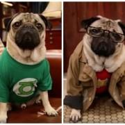 Doug The Pug en parodia de 'The Big Bang Theory'. Pulzo.com