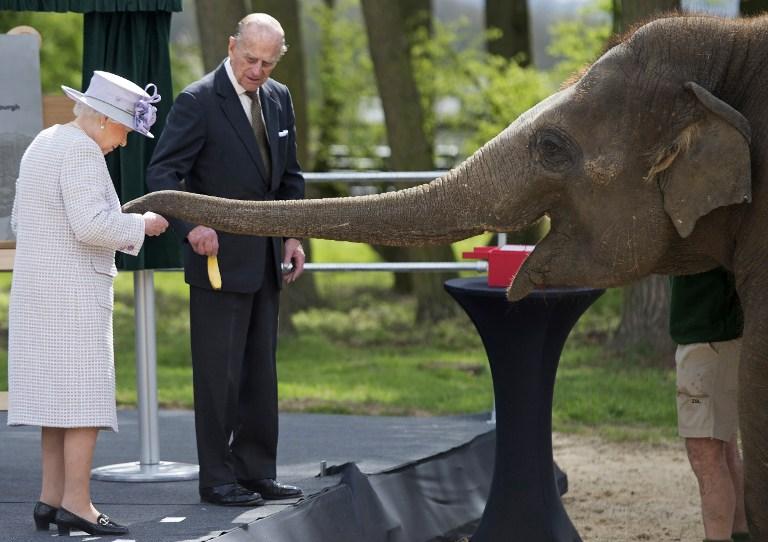 Acompañada por el príncipe Felipe, la reina Isabel alimenta a un elefante. Pulzo.com