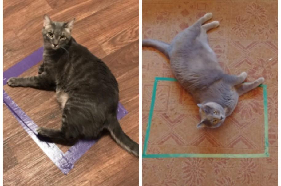 Experimento con gatos y cuadrados. Pulzo.com