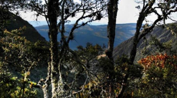 Santuario de Fauna y Flora de Iguaque. Pulzo.com