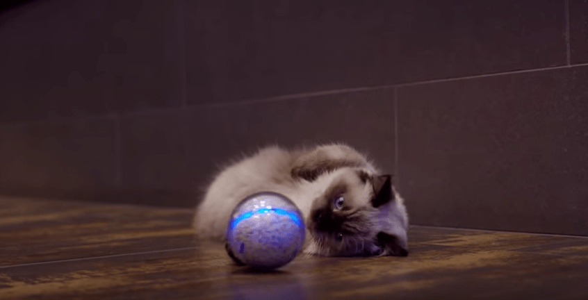 Gato con pelota robot. Pulzo.com