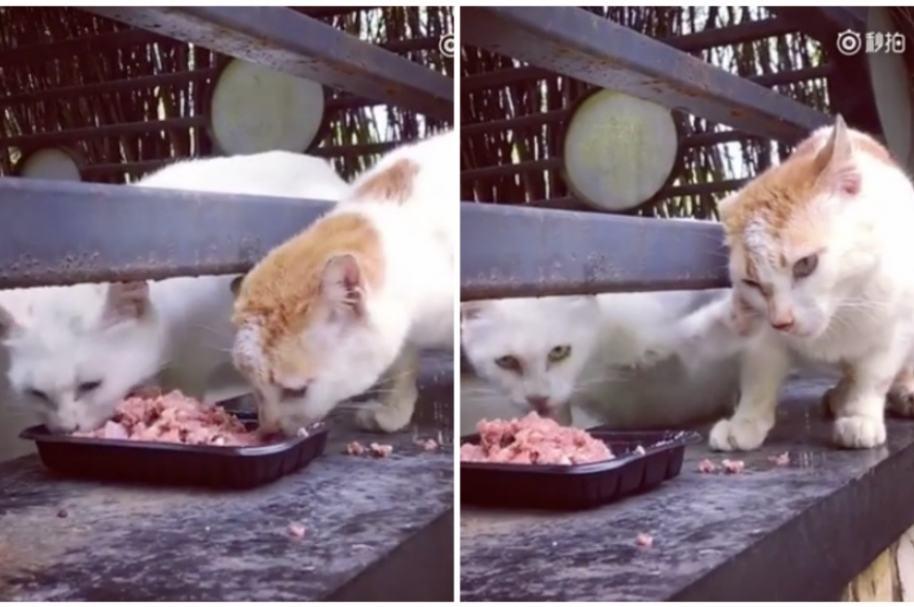 Gato no comparte comida.