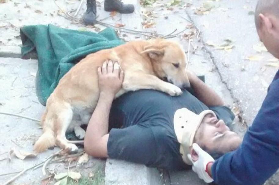 Tony, el perro que acompañó a su amo accidentado