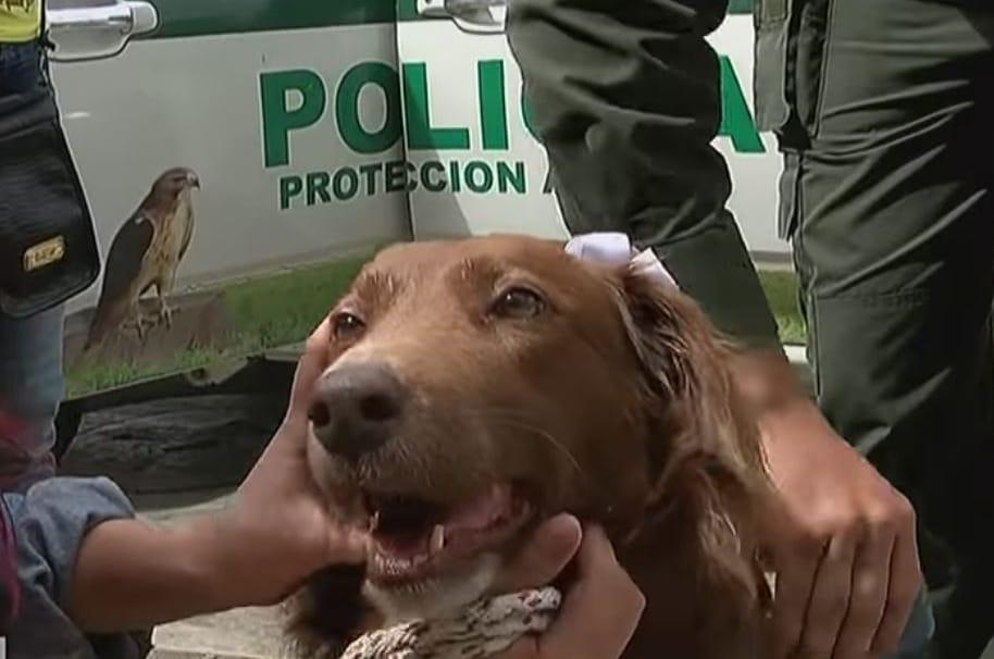 Mona, la perrita que fue llevada por la Policía