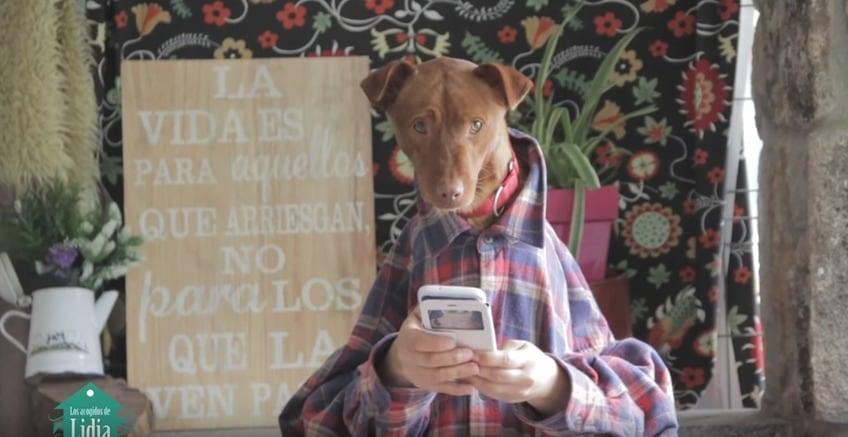 Perro en adopción que aparece en video de versión perruna de 'Despacito'. Pulzo.com