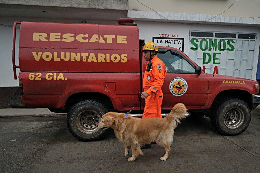 Socorrista y perro