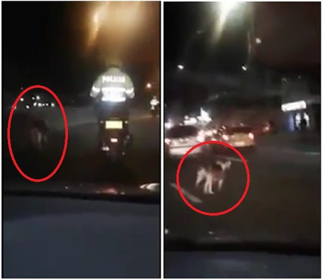 Perro y policía en moto