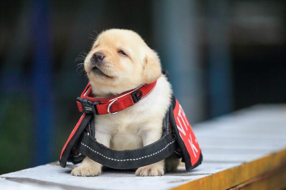 Cachorro de la policía surcoreana.