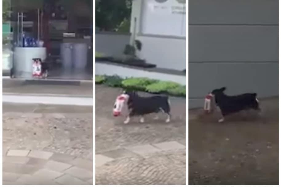 Perro roba concentrado en clínica veterinaria de México. Pulzo.com