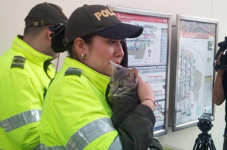 Gato rescatado de la supuesta maleta sospechosa