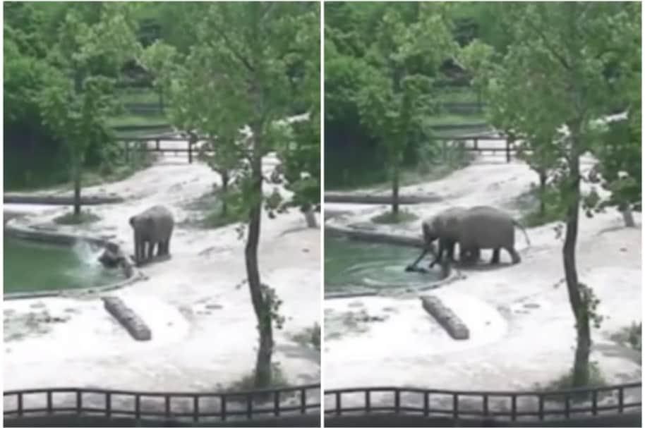 Elefante bebé cae al agua.