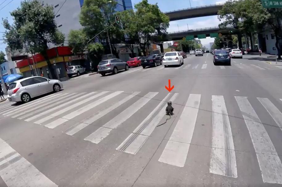 Ciclista rescata perro en Ciudad de México. Pulzo.com