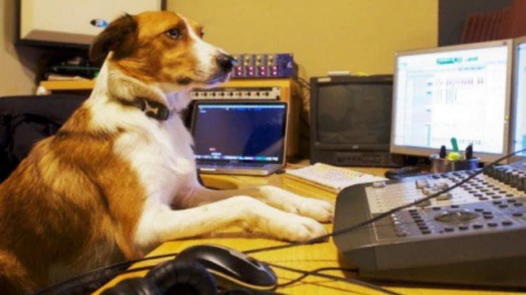 Perro en el trabajo.