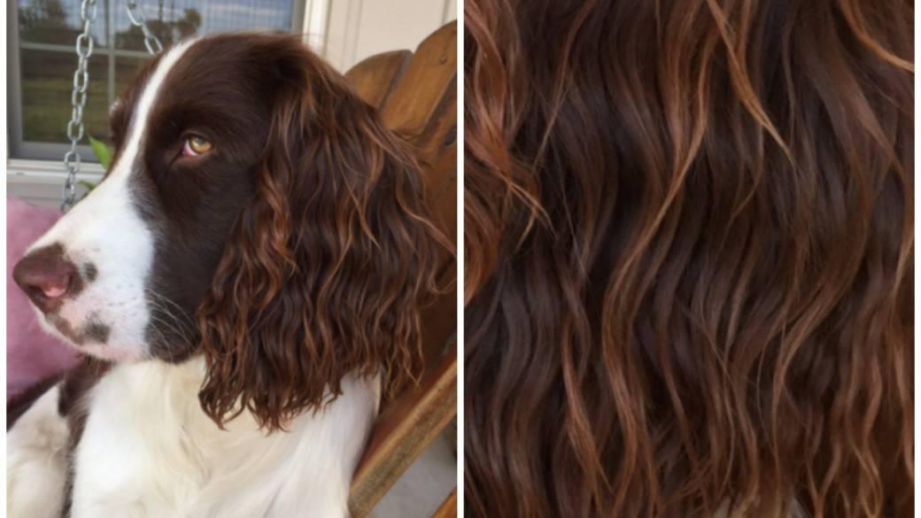 Perro que tiene pelo con look playero. Pulzo.com