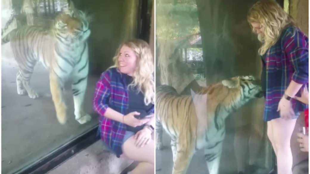 Tigre y mujer.