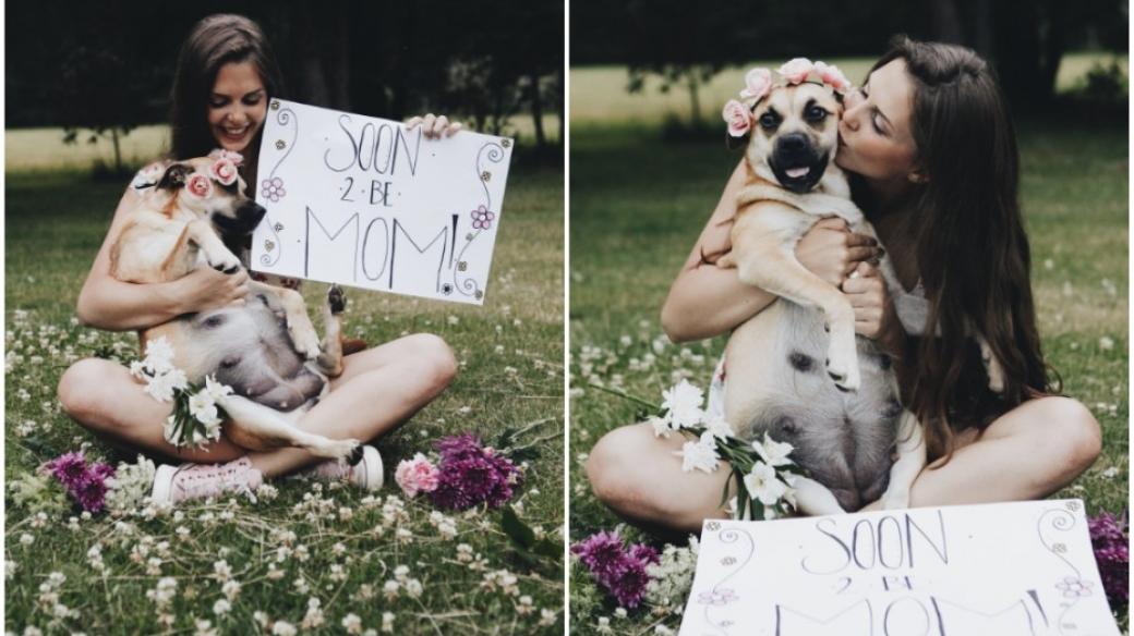 Sesión de fotos de perra embarazada.