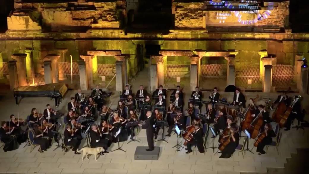 Perro callejero en concierto de música clásica. Pulzo.com