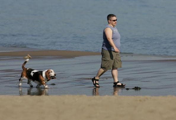 Amos y mascotas obesos