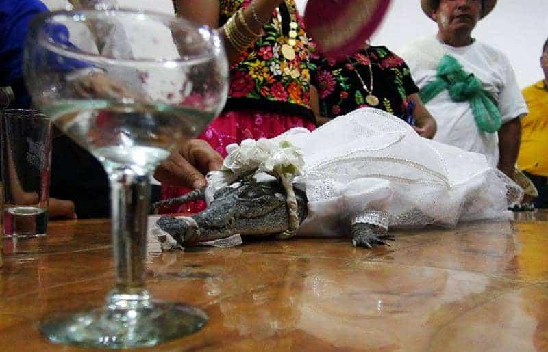 Boda con caimán en San Pedro Huamelula