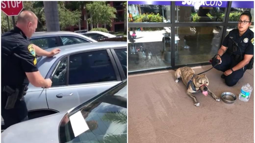 Rescate de perro encerrado en carro.
