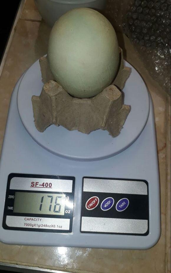 Peso del huevo gigante