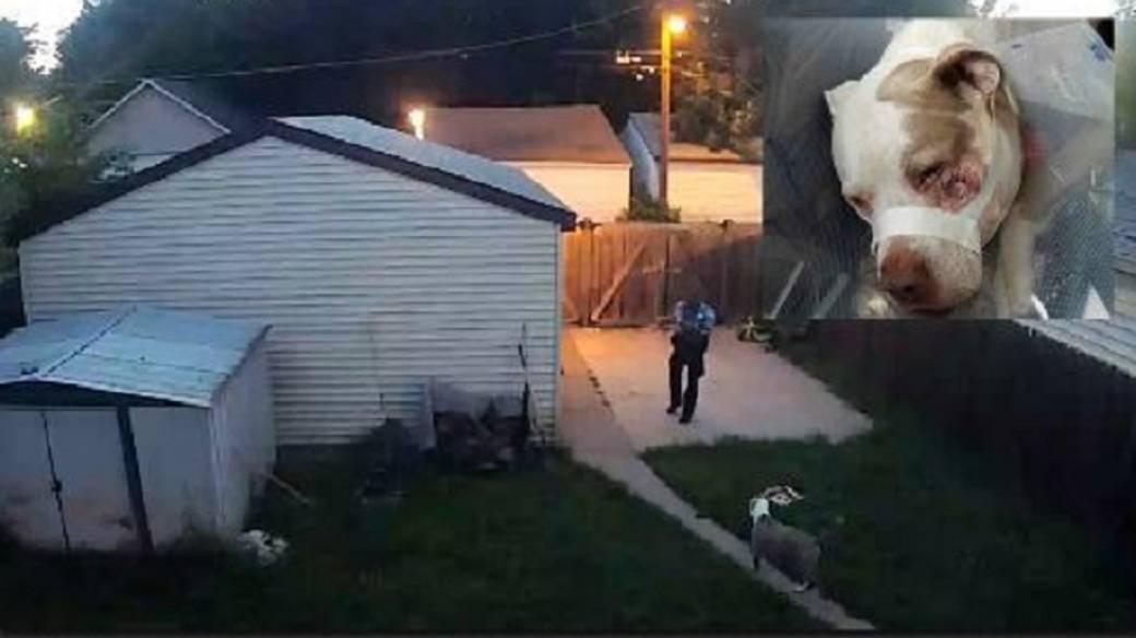 Policía balea a dos perros