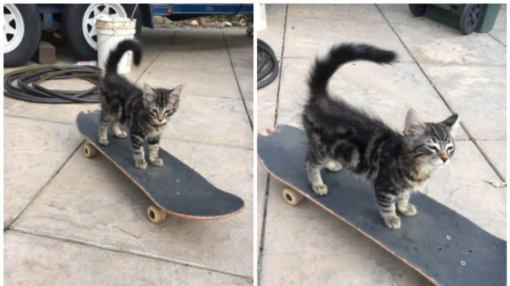 Gato que practica 'skateboarding'. Pulzo.com