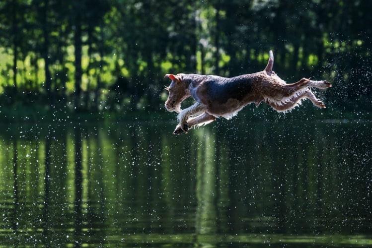 Perro saltando a un lago. Pulzo.com