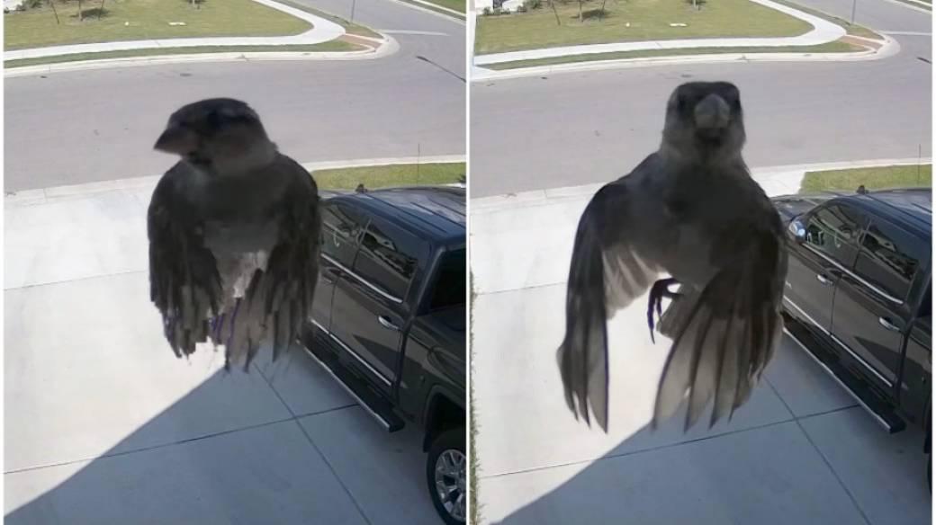 Pájaro vuela sin mover alas.