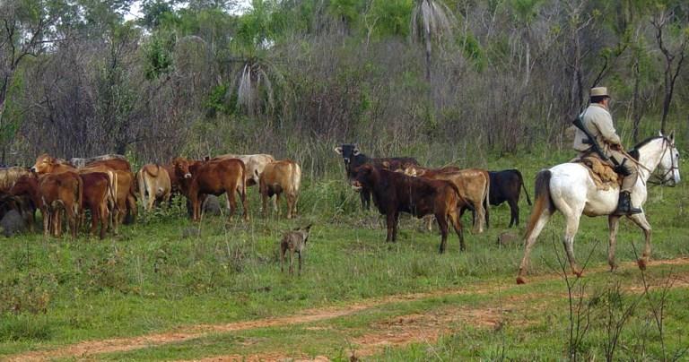 Controles al transporte de ganado