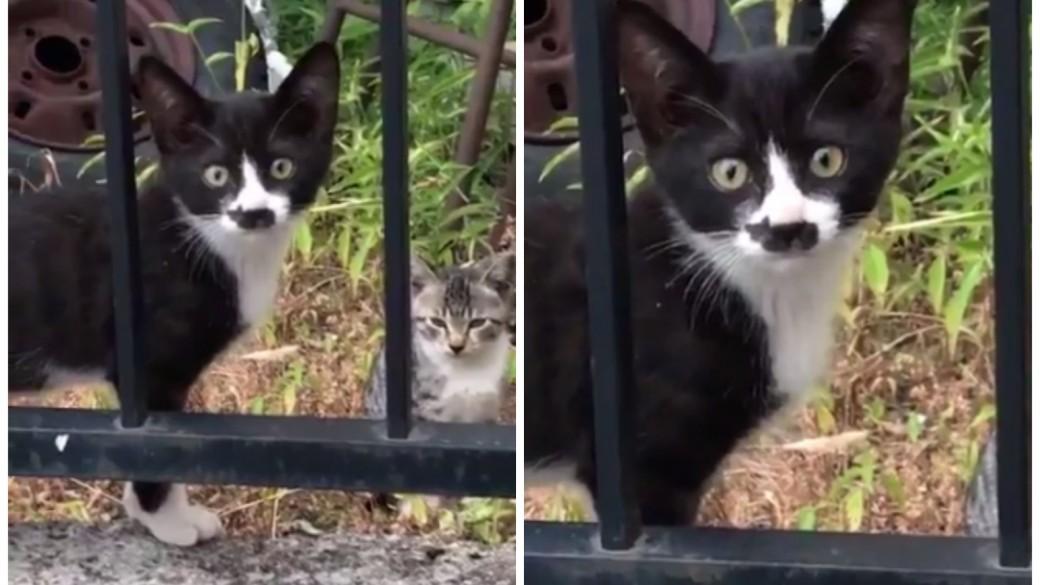 Gatico con mancha de gato en el hocico. Pulzo.com