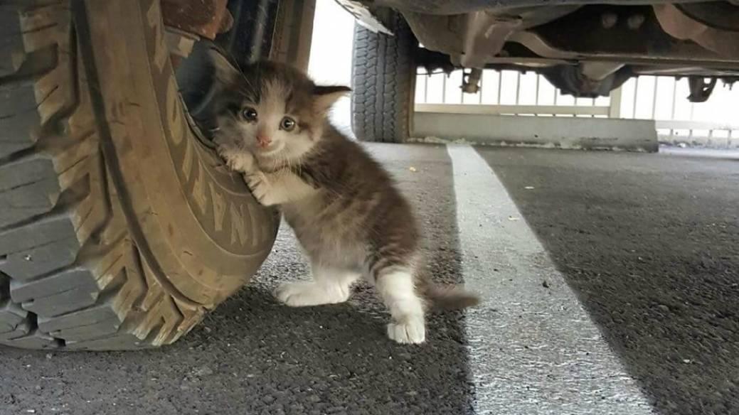 Gatico recostado sobre llanta de un camión. Pulzo.com