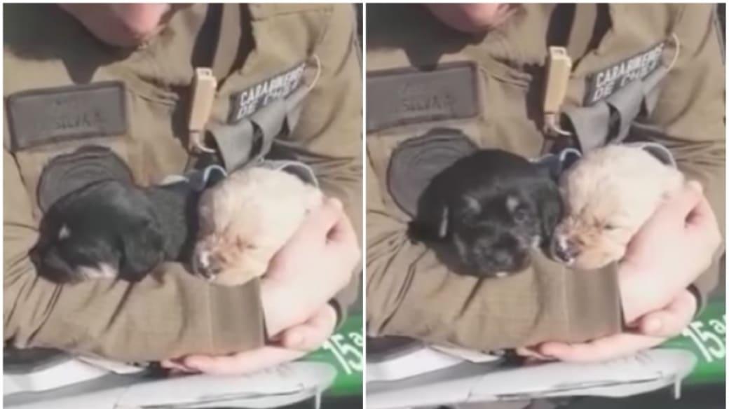 Cachorros rescatados de ahogarse.
