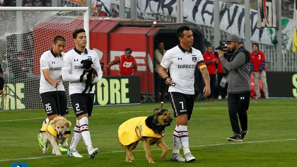 Jugadores del Colo Colo con perros en adopción. Pulzo.com