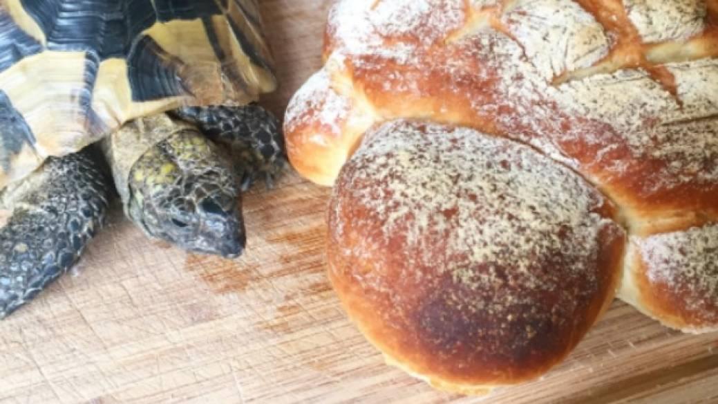 Tortuga con pan parecido a ella. Pulzo.com