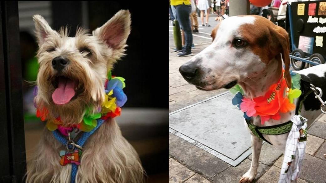 Caminata canina - Pulzo.com