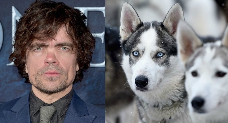 Actor de Game of Thrones, Peter Dinklage, pide a fanáticos no comprar perros husky