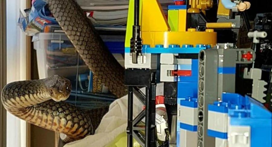 Mujer encuentra serpiente en los juguetes de su hijo.