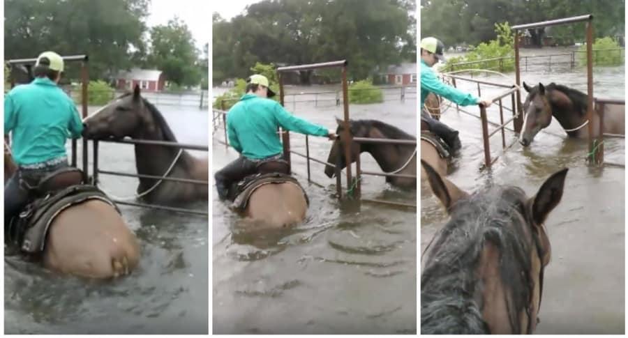 Joven rescatando a un caballo atrapado en el agua. Pulzo.
