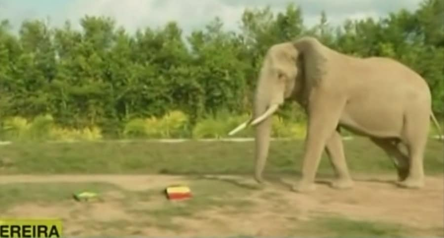 Elefante 'Pirinolo'