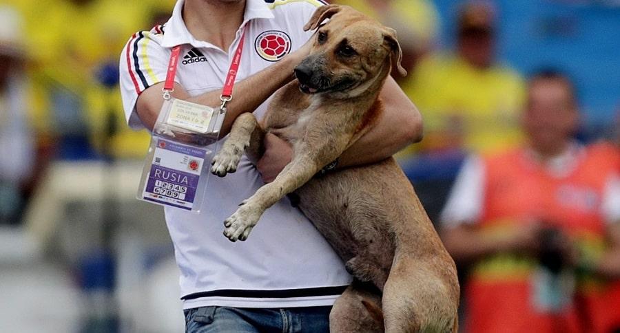 El perrito que se metió al partido