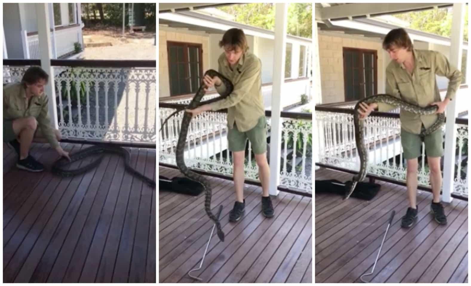 Joven atrapa a serpiente en Australia. Pulzo.