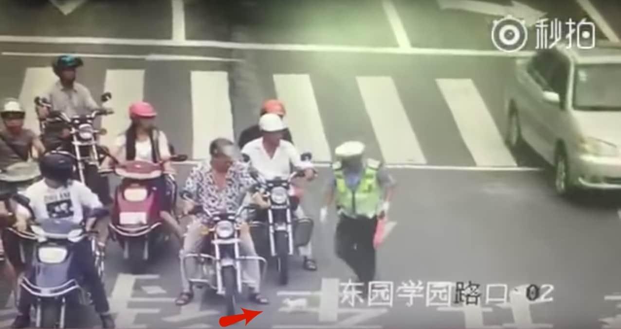 Policía de tránsito rescata a gato en una vía. Pulzo.