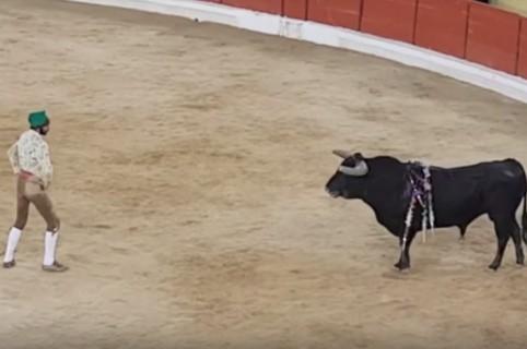 Torero Fernando Quintela en corrida donde recibió ataque mortal. Pulzo.