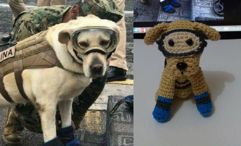 Frida, perra rescatista