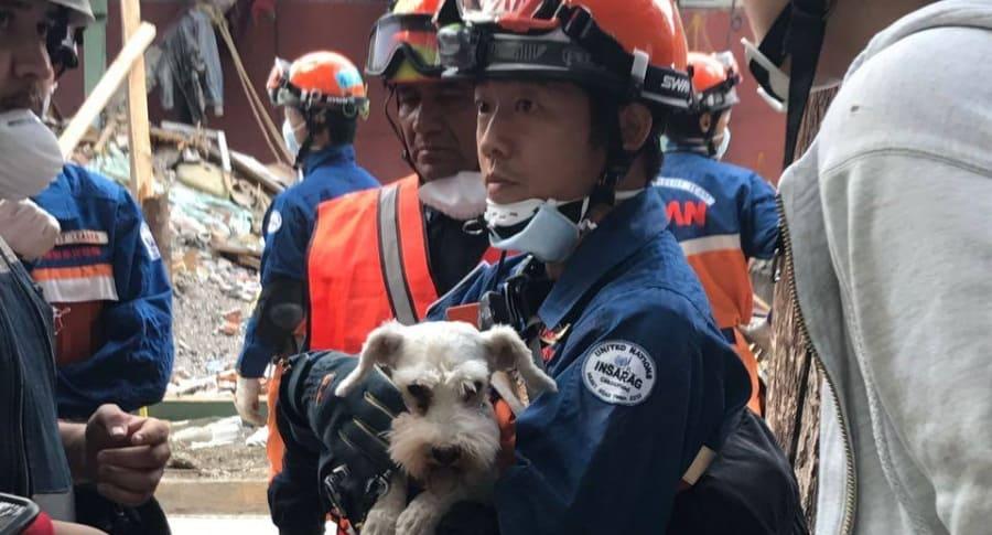 Perro schnauzer rescatado bajo los escombros de un edificio, en Ciudad de México. Pulzo.