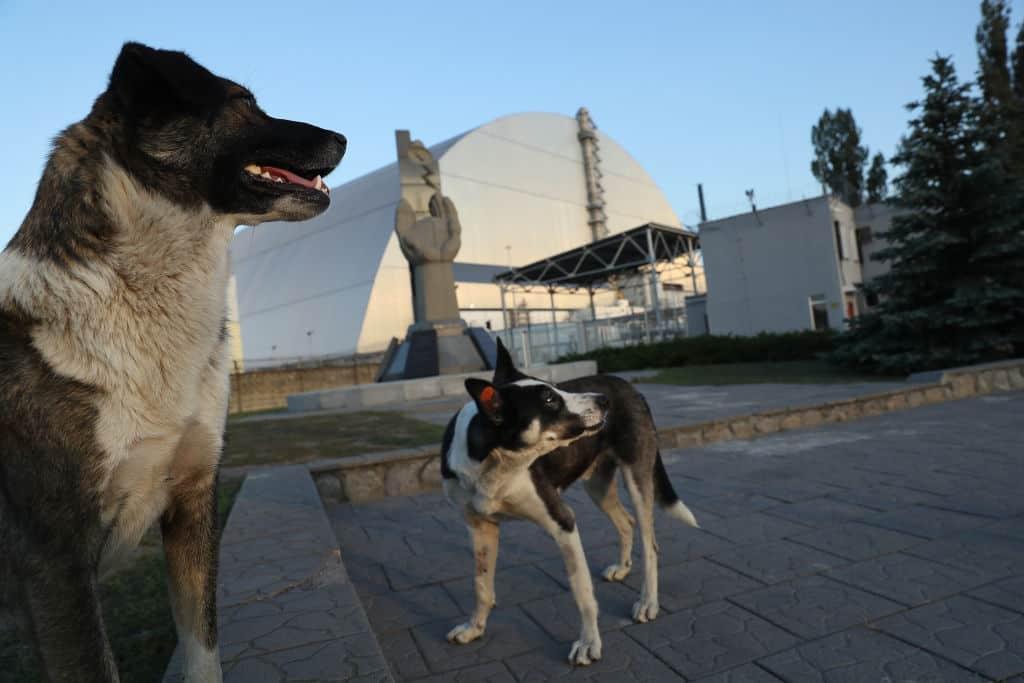 Perros de Chernóbil