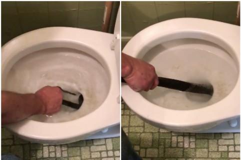 Hombre saca serpiente de un inodoro con las manos. Pulzo.
